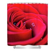 Rose Shower Curtain