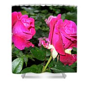 Rose Duo Shower Curtain