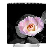 Rose Emergance Shower Curtain
