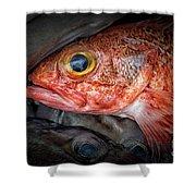 Rose Fish Shower Curtain