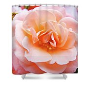 Rose Floral Art Print Peach Pink Roses Garden Canvas Baslee Troutman Shower Curtain