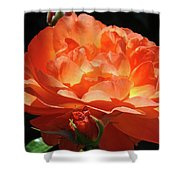 Rose Flower Art Prints Oragne Roses Summer Botanical Baslee Troutman Shower Curtain