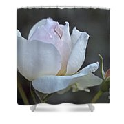 Rose Flower Series 14 Shower Curtain