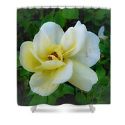 Rose From Home Shower Curtain
