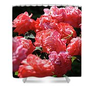 Rose Garden Art Prints Pink Red Rose Flowers Baslee Troutman Shower Curtain
