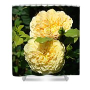 Rose Garden Floral Art Print Yellow Roses Canvas Baslee Troutman Shower Curtain