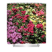 Rose Hill Shower Curtain