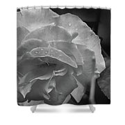 Rose In Black And White Shower Curtain by Kelly Hazel