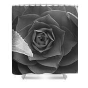 Rose In Black Shower Curtain