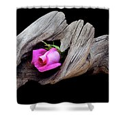 Rose In Driftwood 2 Shower Curtain