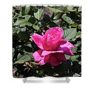 Rose In Flower Bed Shower Curtain
