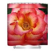 Rose In Reflection Shower Curtain
