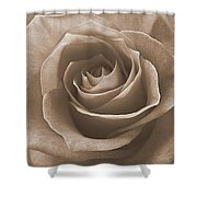 Rose In Sepia Shower Curtain