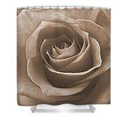 Rose In Sepia Shower Curtain