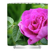 Rose In The Afternoon Shower Curtain