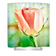Rose In Window Shower Curtain