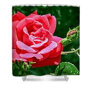 Rose Is Its Name Shower Curtain