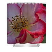 Rose Macro   Shower Curtain
