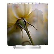 Rose Nuances Shower Curtain