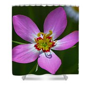 Rose Of Plymouth Shower Curtain