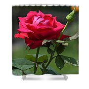 Rose Of Romance Shower Curtain
