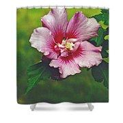 Rose Of Sharon Blossom Shower Curtain