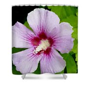 Rose Of Sharon Close Up Shower Curtain