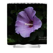 Rose Of Sharon - Hibiscus Syriacus Shower Curtain