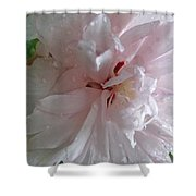 Rose Of Sharon In The Rain Shower Curtain
