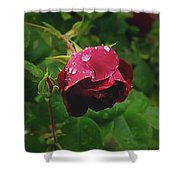 Rose On The Vine Shower Curtain