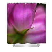 Rose Petal Nuances Shower Curtain