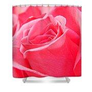 Rose Petals - 1 Shower Curtain