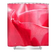 Rose Petals - 2 Shower Curtain