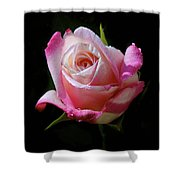 Rose Photo Shower Curtain