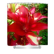 Rose Pink Lily Shower Curtain
