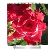 Rose Pink With Guest Shower Curtain