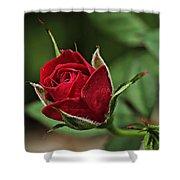 Rose Portrait  Shower Curtain