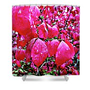 Rose Red 2 Shower Curtain