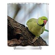 Rose-ringed Parakeet 04 Shower Curtain
