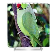 Rose-ringed Parakeet Shower Curtain