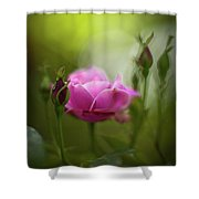Rose Sentinel Shower Curtain