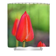 Rose Sheen Shower Curtain