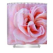Rose Spiral Art Pink Roses Floral Baslee Troutman Shower Curtain