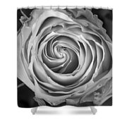 Rose Spiral Black And White Shower Curtain by James BO  Insogna