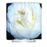 Rose Study 2 Shower Curtain