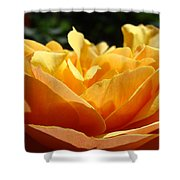 Rose Sunlit Orange Rose Garden 7 Rose Giclee Art Prints Baslee Troutman Shower Curtain