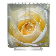 Rose Tote Bag Design Shower Curtain