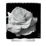 Rose Unfurled In Black And White Shower Curtain