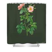 Rose105 Shower Curtain