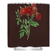 Rose115 Shower Curtain